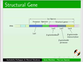 Gene Machine The Lac Operon - thumb